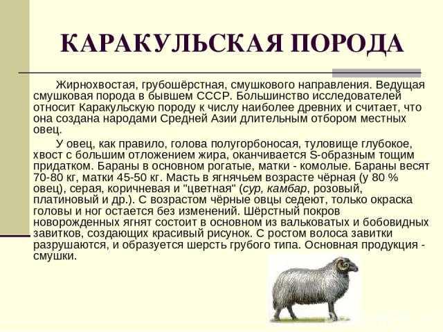 Грубая поваленная овца: характеристики, использование и информация о породе