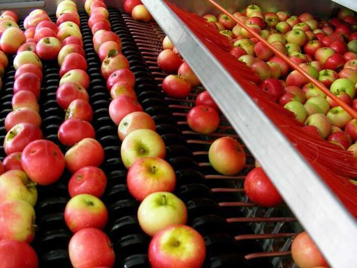 Apple Farming: прибыльный бизнес-план по производству яблок