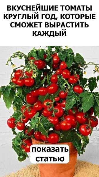 Выращивание помидоров: выращивание органических помидоров в домашнем саду