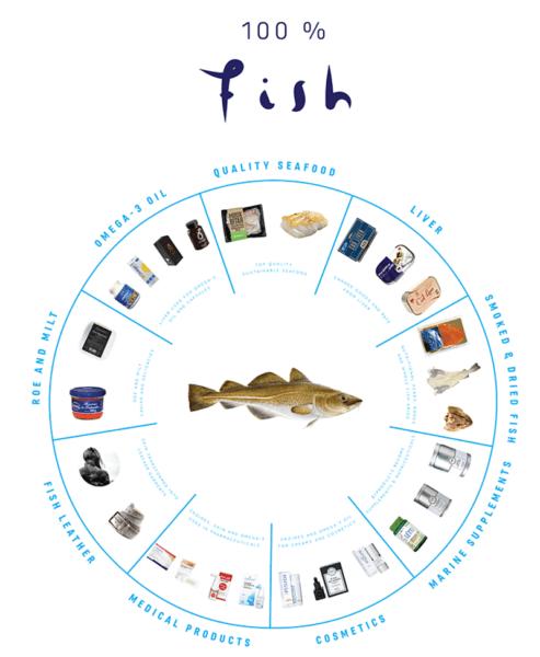 Рыбоводство тилапии: полное руководство по бизнесу для начинающих