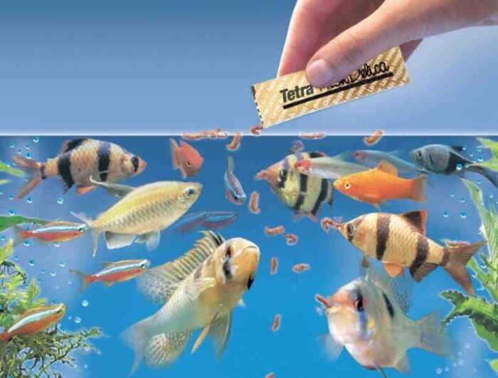 Корм для рыб: как кормить рыбу для лучшего роста и здоровья